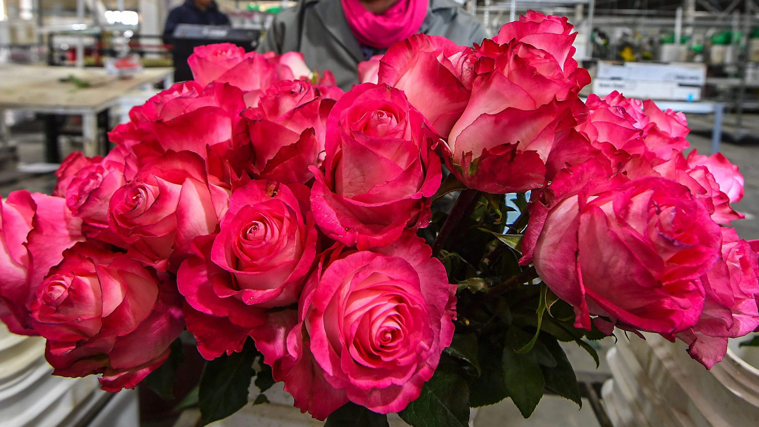 same day flowers delivery toronto